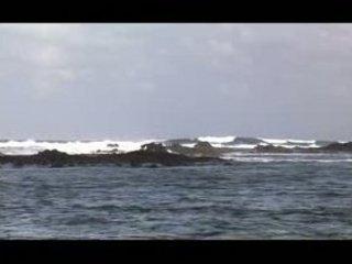 vonda bottom on the sea coast